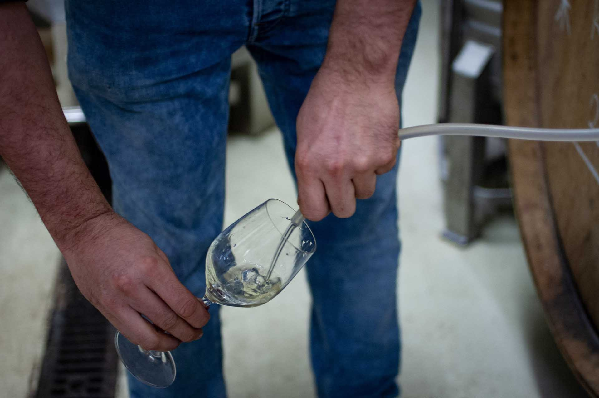 Winzer Sebastian Menges holt eine Probe eines Jungweines mit Schlauch