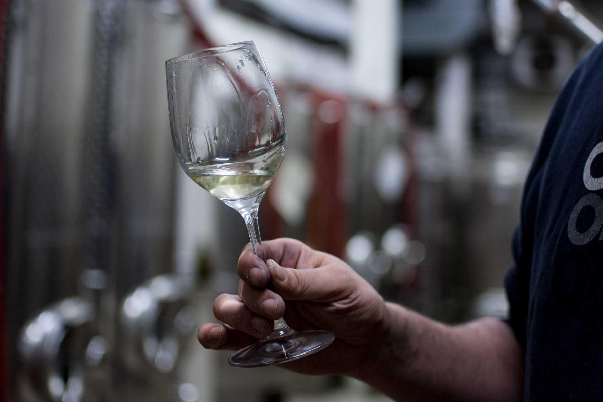 Glas mit Jungwein, schwenkend
