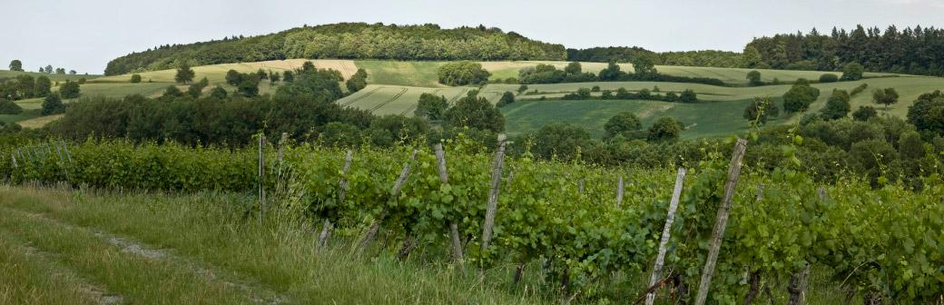 Weingut Zorn Kraichgaulandschaft