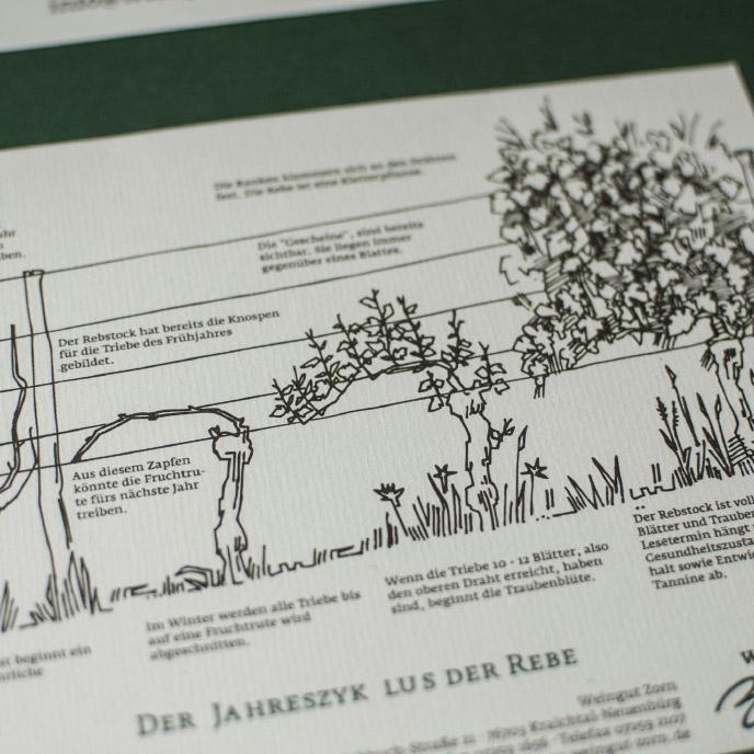 Weingut Zorn Jahreszyklus Rebe Illustration